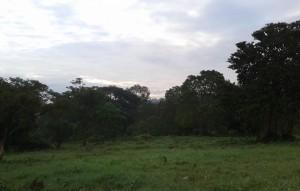 greenviews